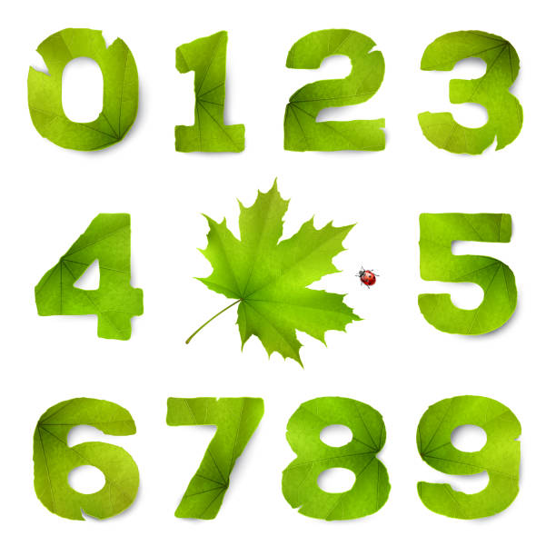 set of vector numbers made from green leaves, isolated on white background - four seasons stock illustrations