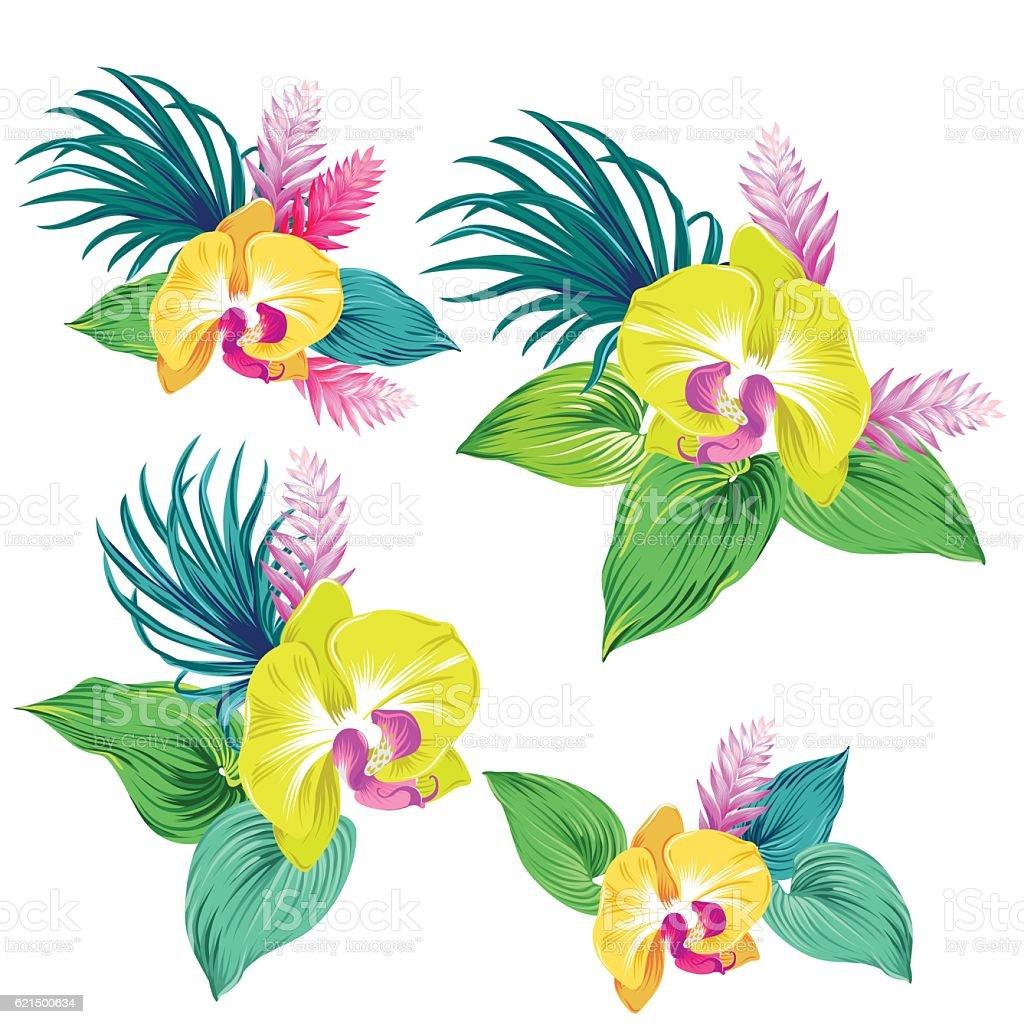 set of vector orchids. isolated. set of vector orchids isolated - immagini vettoriali stock e altre immagini di botanica royalty-free