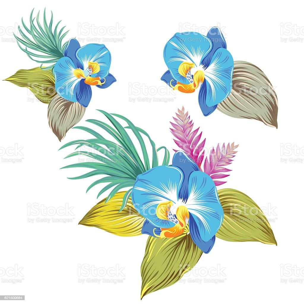 set of vector orchids. isolated. set of vector orchids isolated - immagini vettoriali stock e altre immagini di blu royalty-free