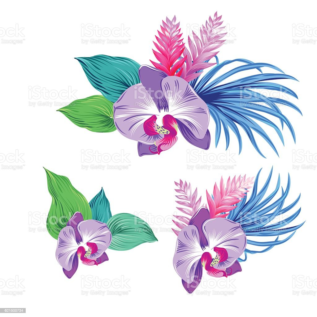 set of vector orchids. isolated. Lizenzfreies set of vector orchids isolated stock vektor art und mehr bilder von ast - pflanzenbestandteil