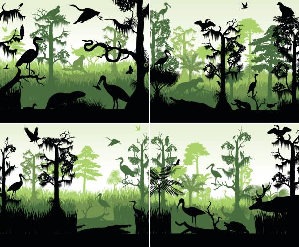 set of vector rainforest wetland silhouettes in sunset design template with animals set of vector rainforest wetland silhouettes in sunset design template with animals amazon stock illustrations