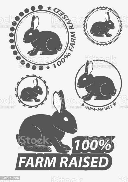 Set of vector silhouette the rabbit hare hare hunting rabbits vector vector id952749830?b=1&k=6&m=952749830&s=612x612&h=6 pgo7yxerfum1 evddd 49udstnbg6t9jd2w58ztxe=