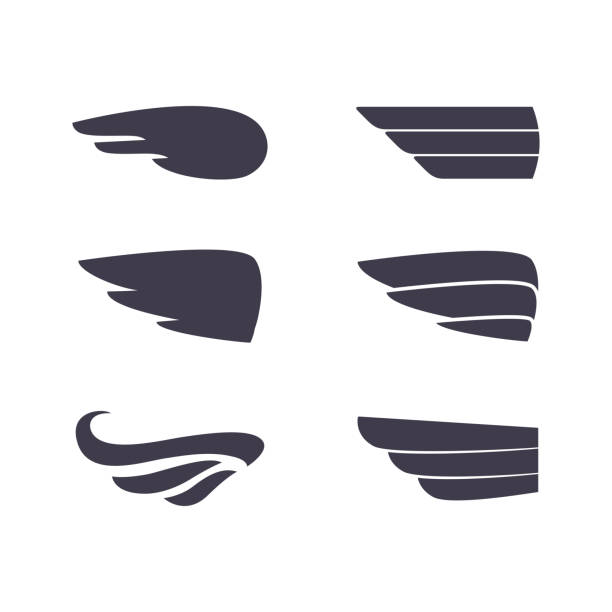 Set of vector silhouettes wings Set of vector silhouettes wings. Elements for logo, labels and badges designs. aircraft wing stock illustrations