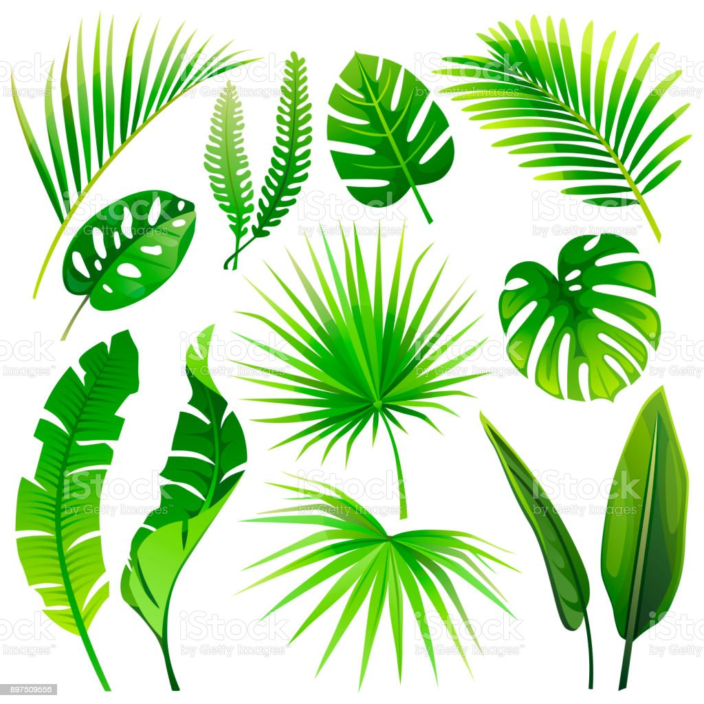 set of vector tropical leaves vector illustration realistic plants rh istockphoto com vector plants top view vector planet