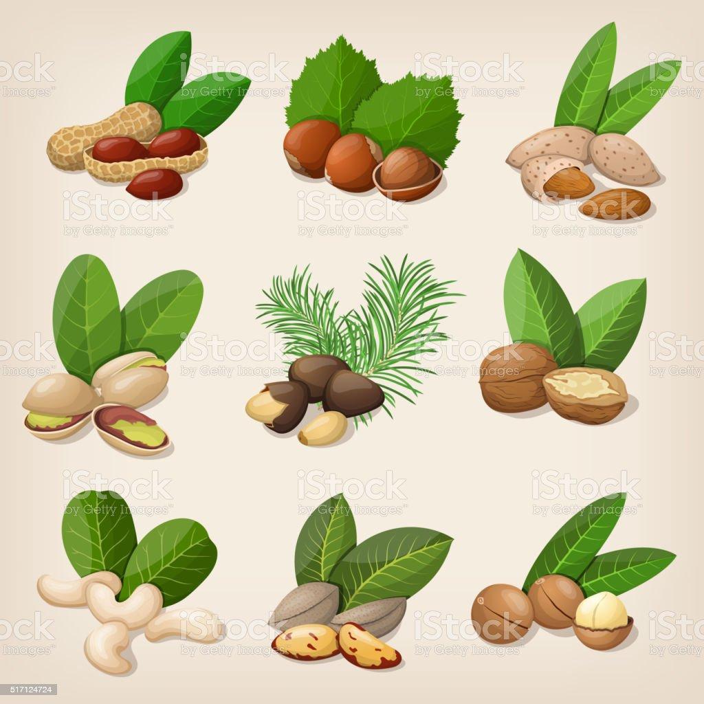 Set of vector various nuts. Vector illustration vector art illustration