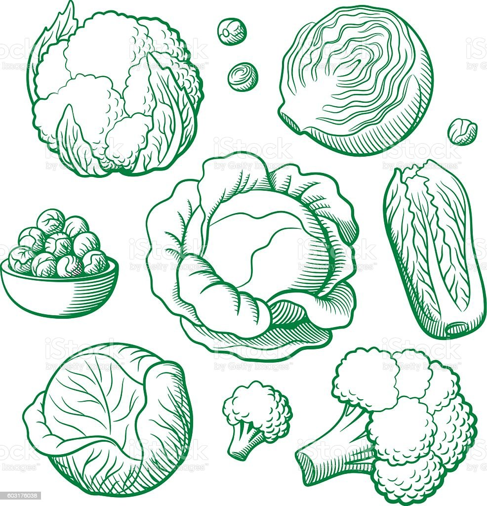 Set of vector vegetables vector art illustration
