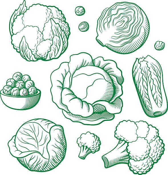 stockillustraties, clipart, cartoons en iconen met set of vector vegetables - spruitjes