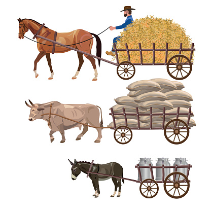Set of vector vehicles with draft animals