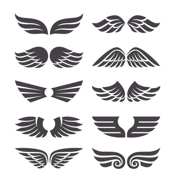 set of vector wings - animal limb stock illustrations