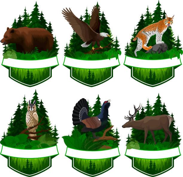 bildbanksillustrationer, clip art samt tecknat material och ikoner med uppsättning vektor skogsmark emblem med lodjur, björn, eagle, rådjur och tjäder - tjäder