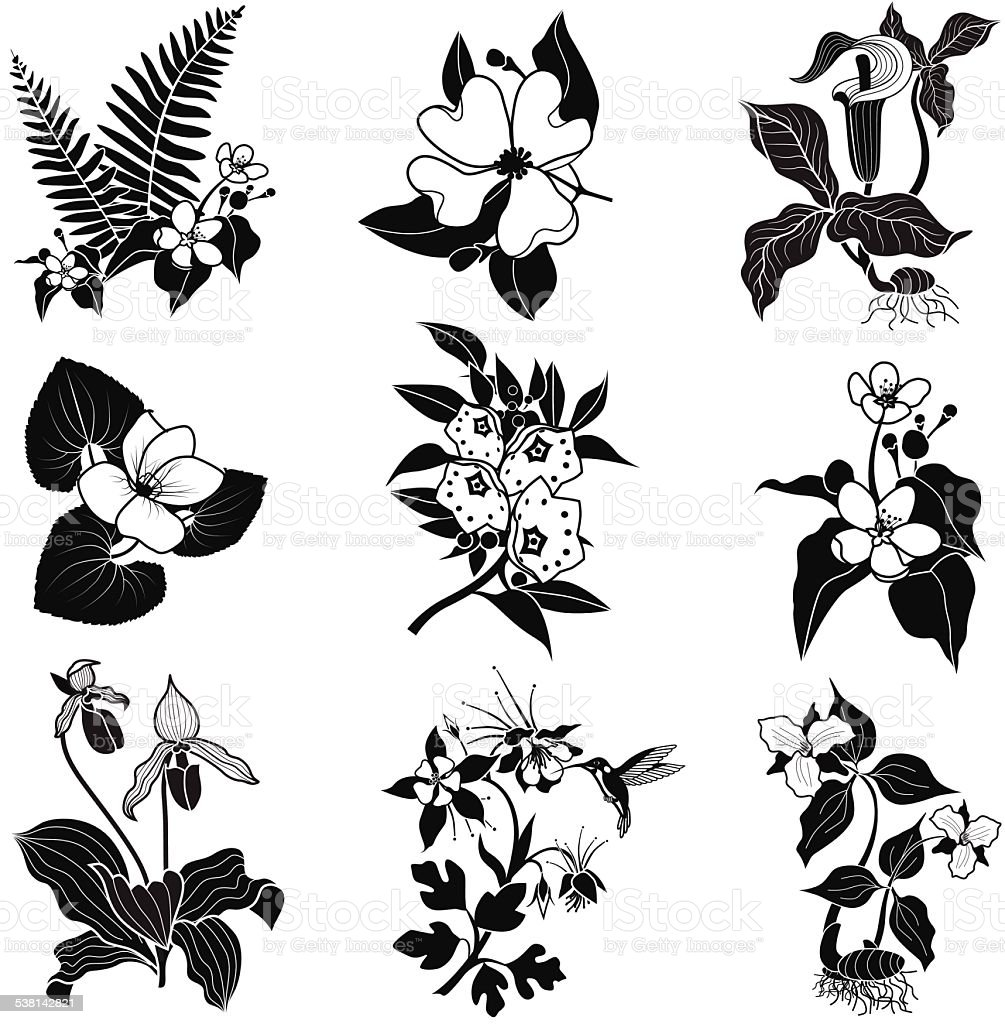 set of vector woodland flowers in black and white vector art illustration