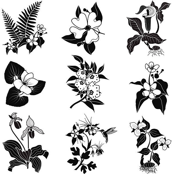 set of vector woodland flowers in black and white A vector illustration of a set of woodland flowers in black and white. An EPS file and a large jpg are included in this download. trillium stock illustrations