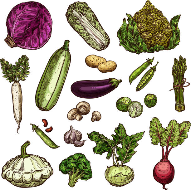 Best Root Vegetable Illustrations, Royalty-Free Vector ...