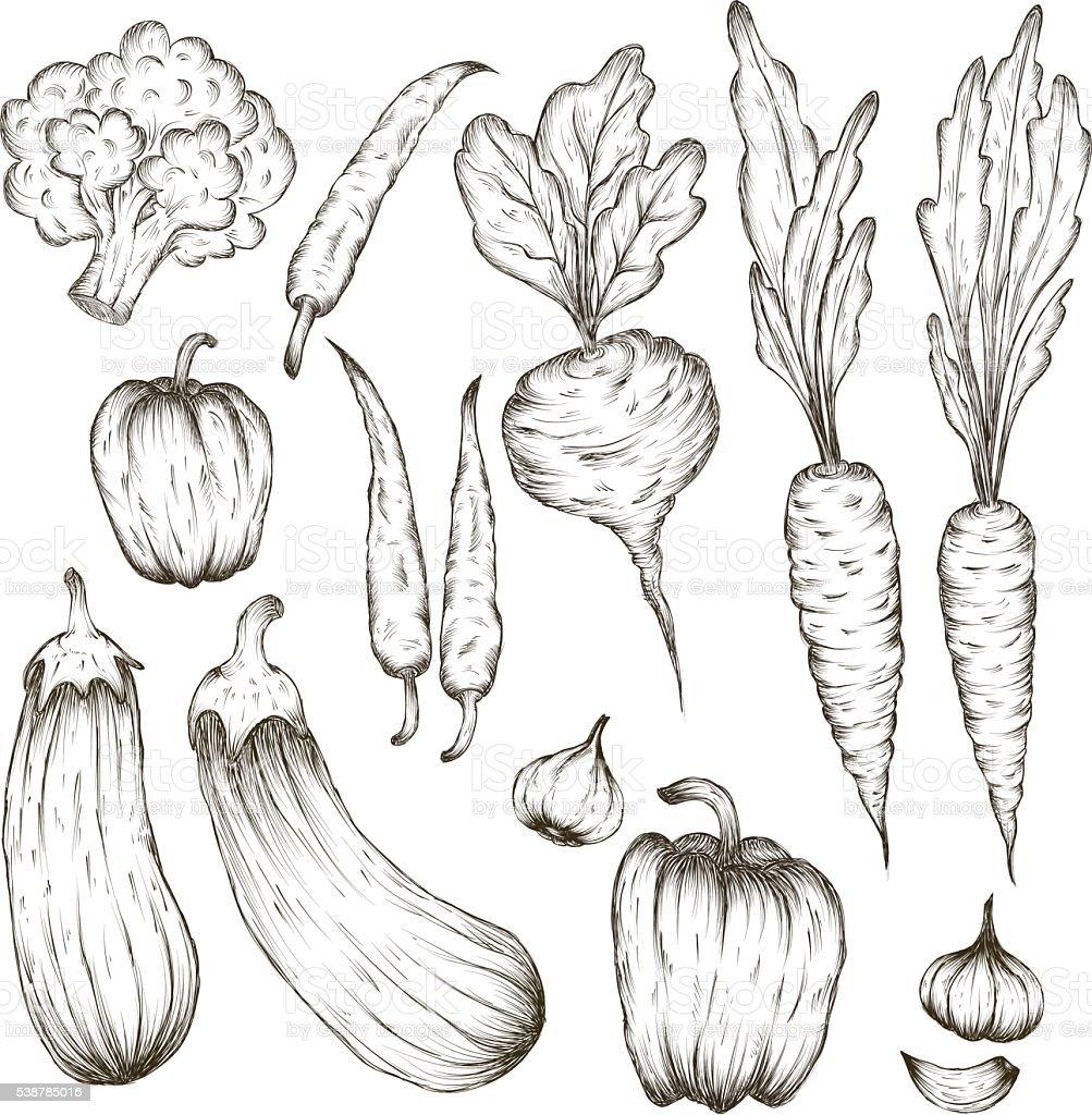 Ein satz von gem se und pflanzen von hand gezeichnete - Colorare le pagine di verdure ...