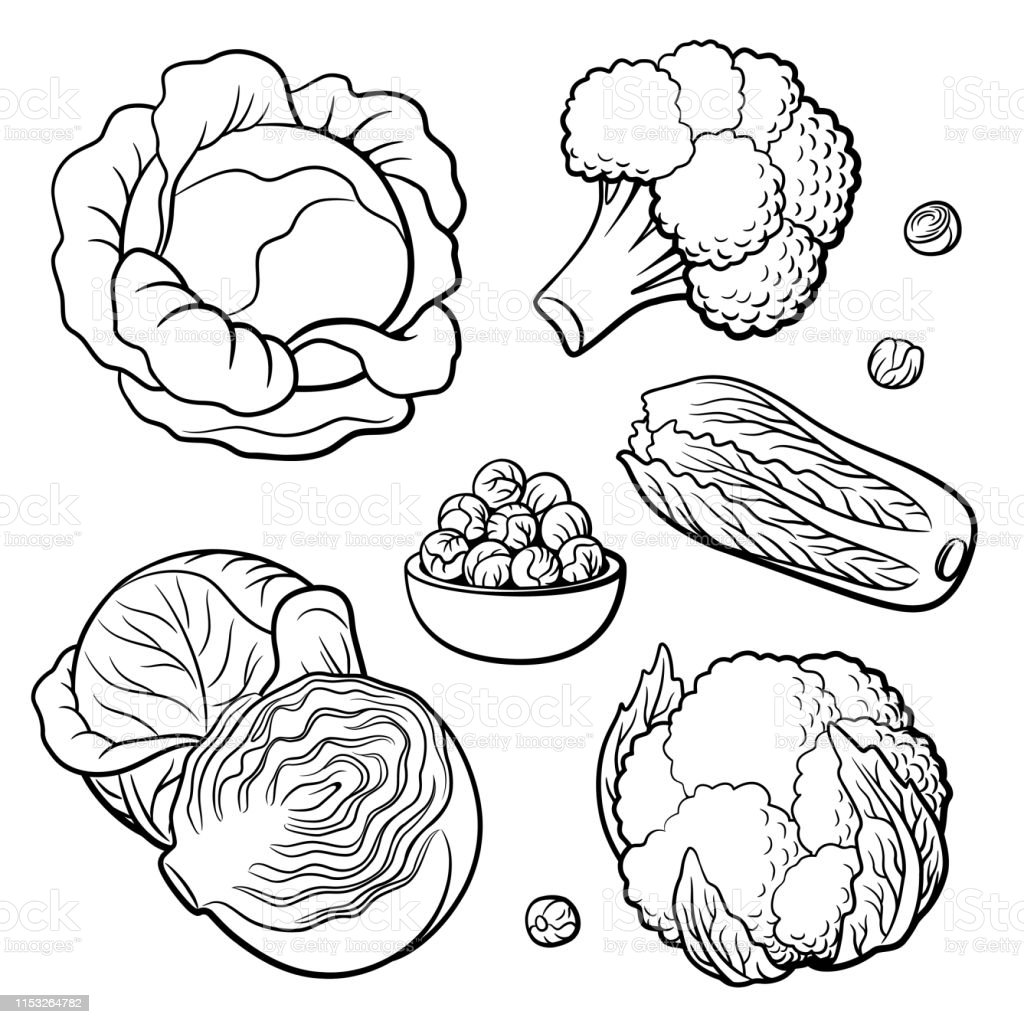 set of vegetables cabbage broccoli cauliflower chinese cabbage and brussels sprouts stock illustration download image now istock set of vegetables cabbage broccoli cauliflower chinese cabbage and brussels sprouts stock illustration download image now istock