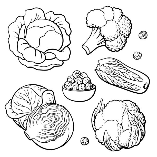 stockillustraties, clipart, cartoons en iconen met set van groenten. kool, broccoli, bloemkool, chinese kool en spruitjes - spruitjes