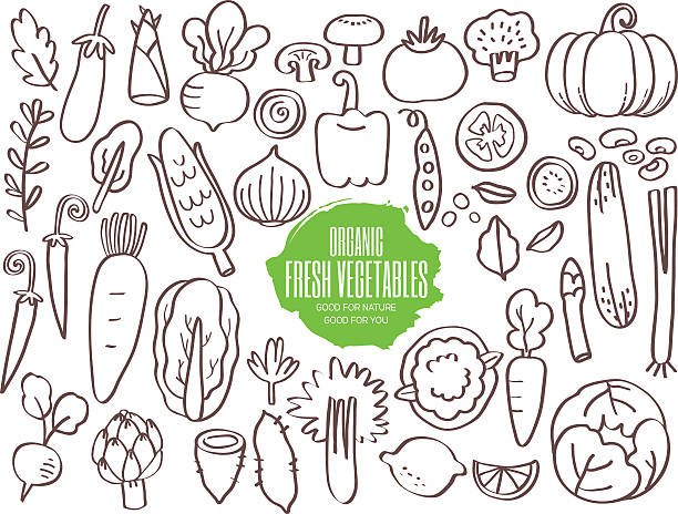 Set of vegetables doodles Set of hand drawn vegetables doodles artichoke stock illustrations