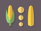 Set of Vegetables in a Flat Style - Corn