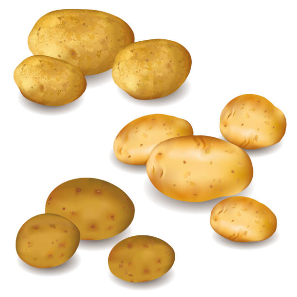 satz von gemüse kartoffeln isoliert auf weißem hintergrund - kartoffeln stock-grafiken, -clipart, -cartoons und -symbole