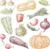 The vector drawing of a different vegetables.