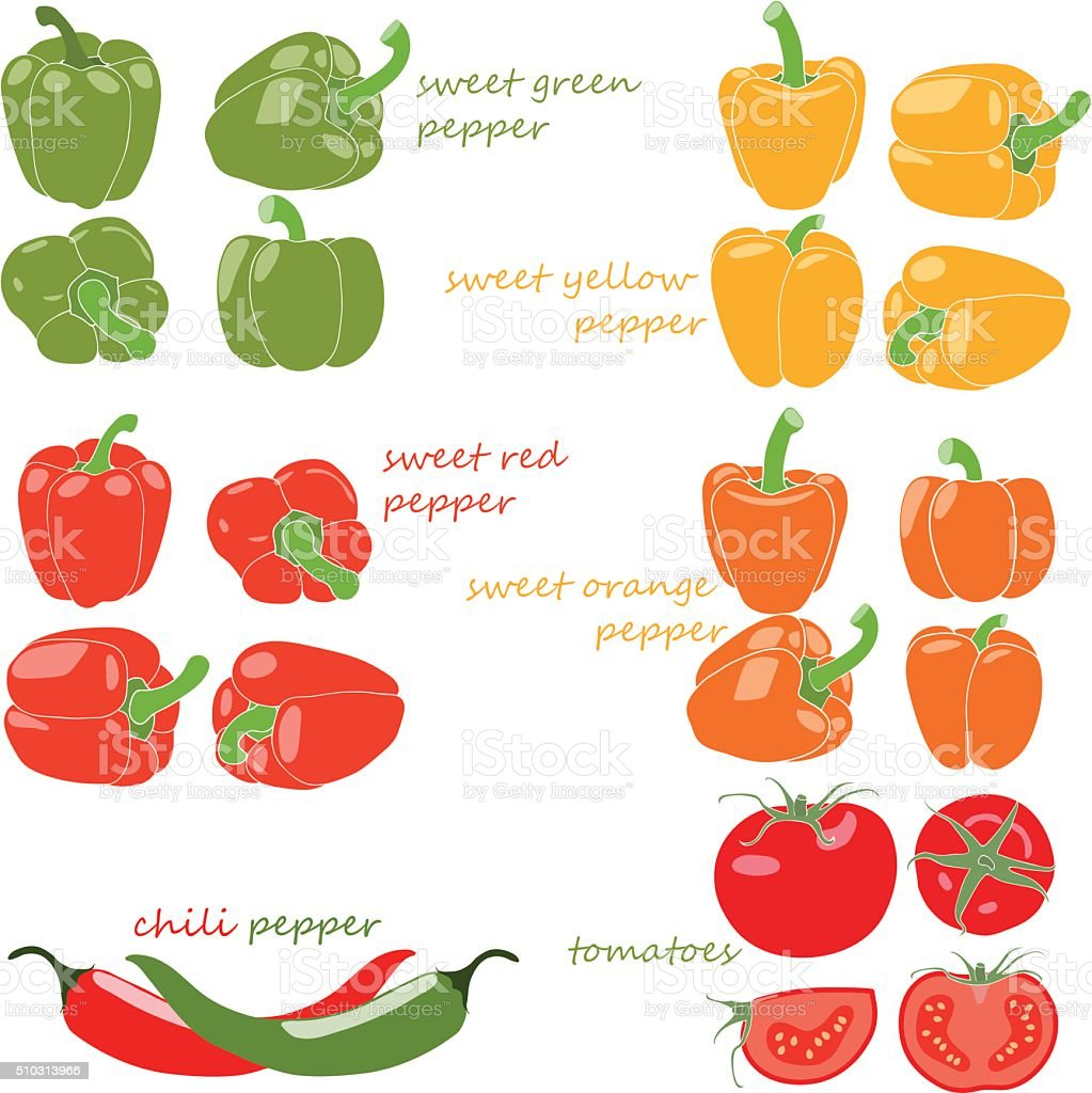 Set of vegetables with captions vector art illustration