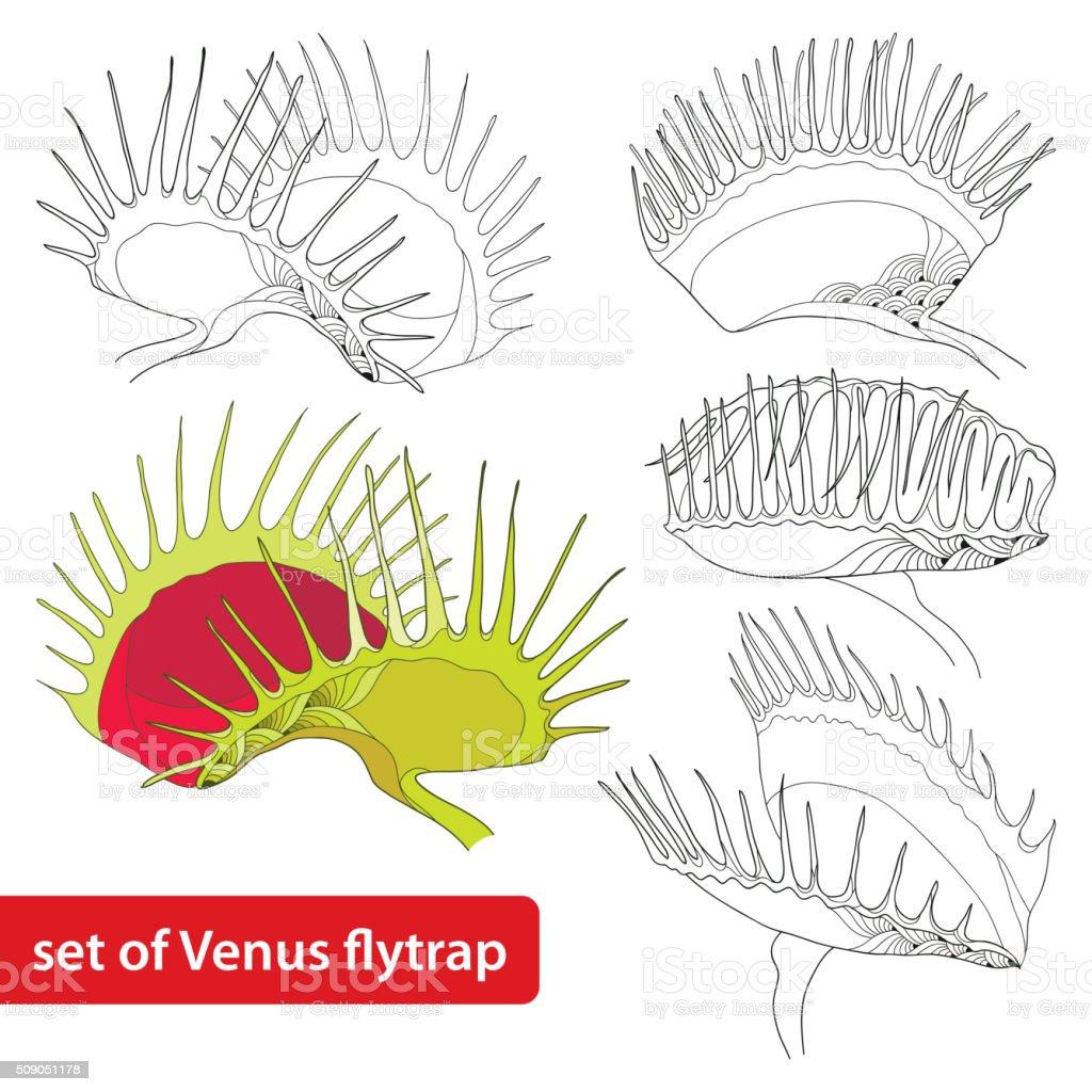 Set Of Venus Flytrap Isolated On White Background Stock Vector Art ...