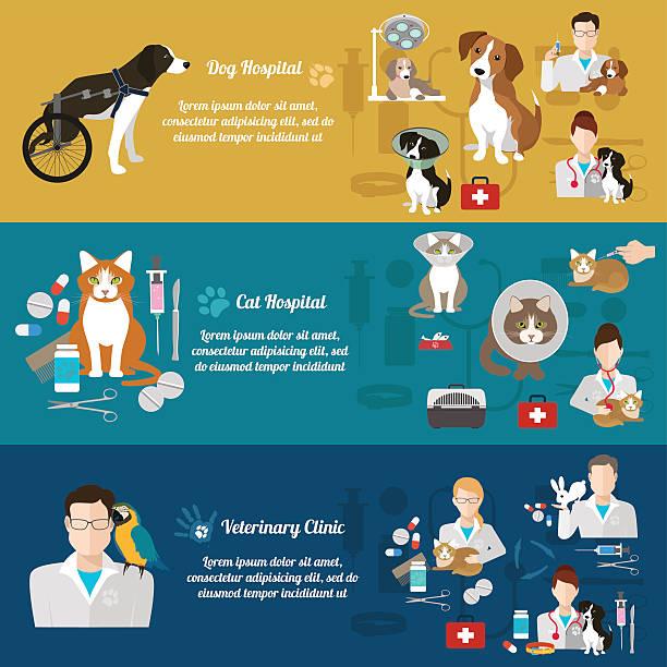 set of  vet clinic banners. pet care. flat design - veterinarian stock illustrations, clip art, cartoons, & icons