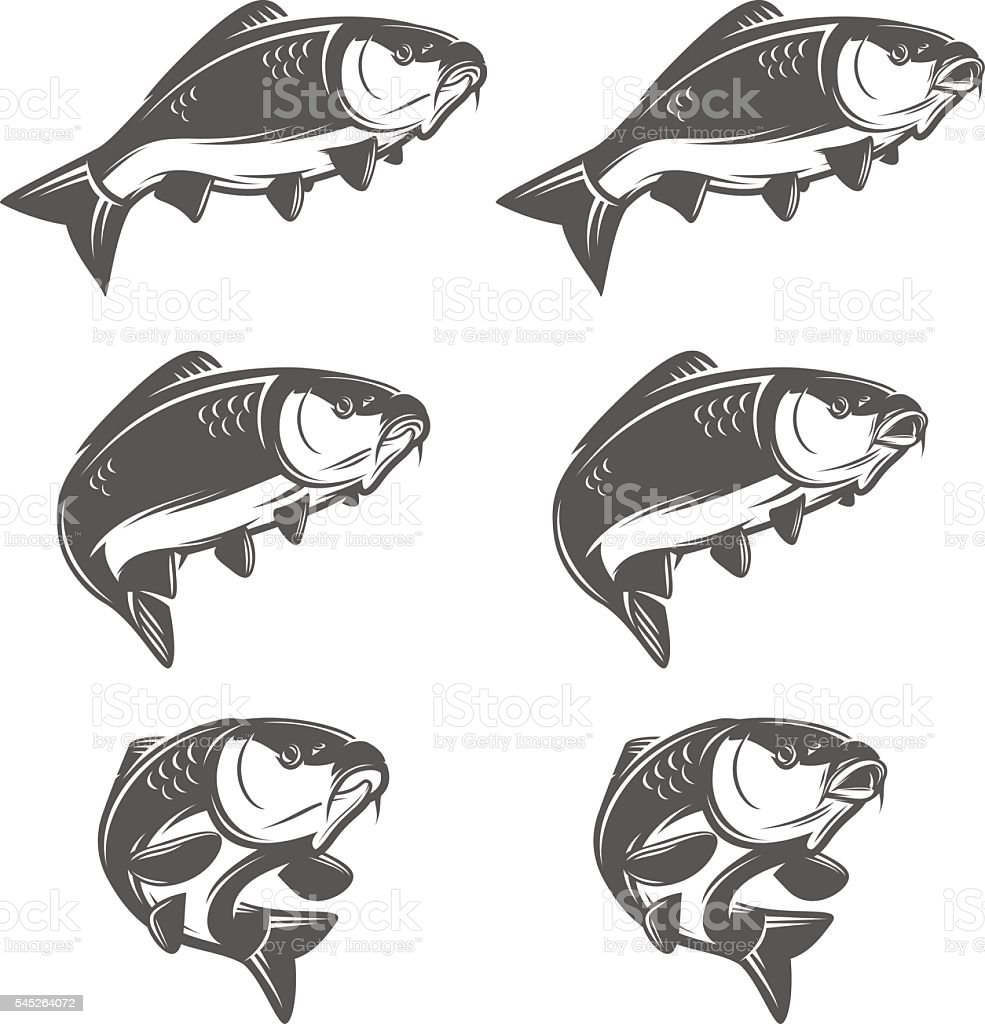 Set of vintage carp fish in various positions vector art illustration