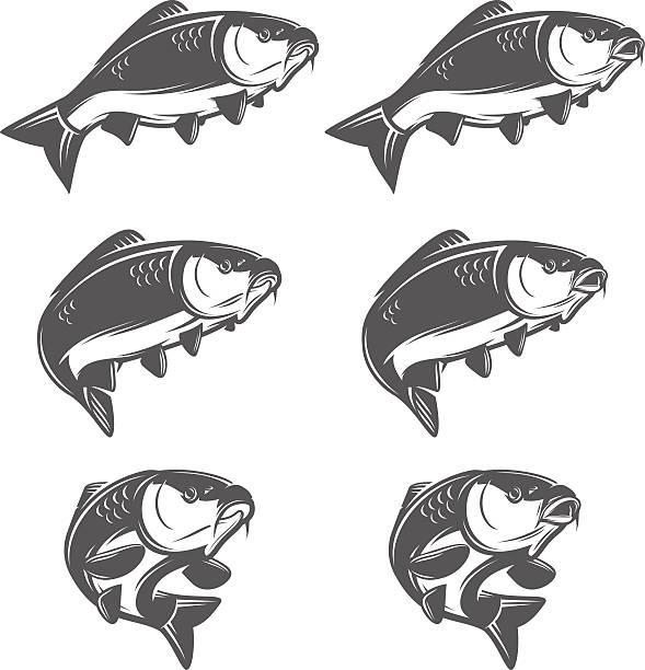 stockillustraties, clipart, cartoons en iconen met set of vintage carp fish in various positions - carp