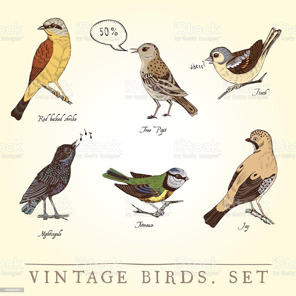 Ensemble De Vintage Oiseaux De Couleur Cliparts Vectoriels Et Plus