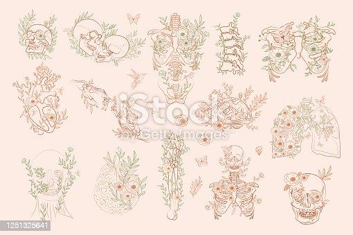 istock Set of Vintage Floral Anatomy elements 1251325641