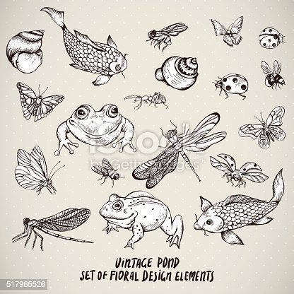 Set of vintage monochrome pond water animals vector elements, Botanical shabby chic illustration frog snail, shell dragonfly carp, butterfly, ladybird fly ant