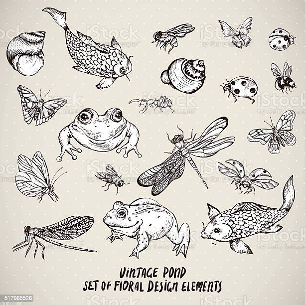 Set of vintage pond water animals vector elements vector id517965526?b=1&k=6&m=517965526&s=612x612&h=nglatcmef pufnxroubkuzik5m4iuunx8sd0jilv2uq=