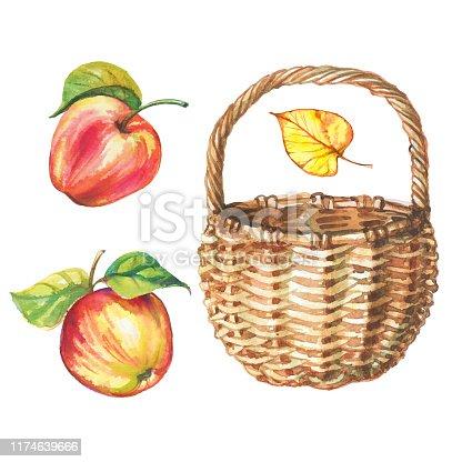 Set of watercolor apples and wicker basket. Vector.