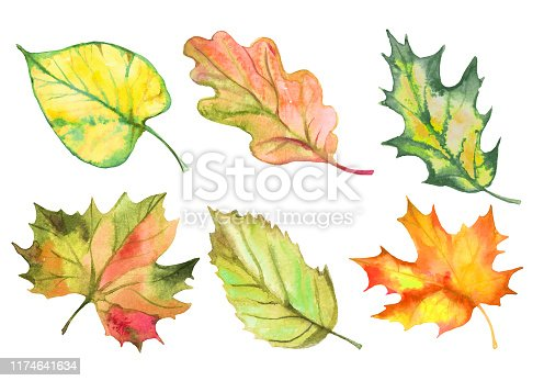 istock Set of watercolor autumn leaves. Vector 1174641634