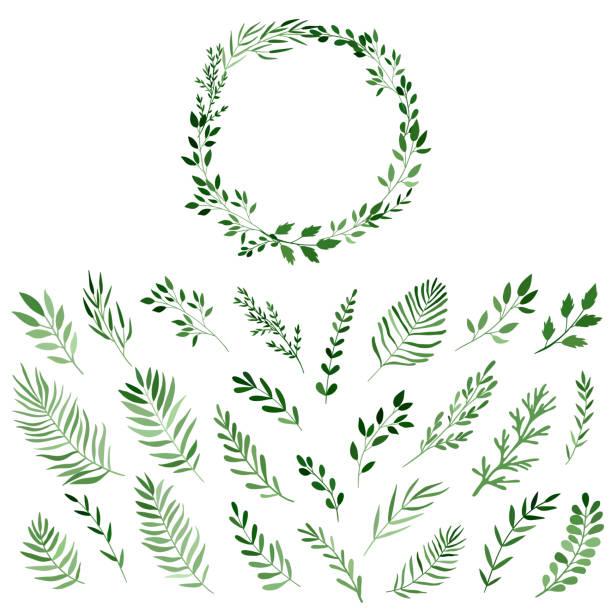 花輪のデザインのための水彩の枝のセット、ホワイトに分離されたベクトル - ボタニカル点のイラスト素材/クリップアート素材/マンガ素材/アイコン素材
