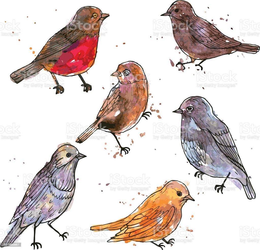 set of watercolor drawing birds vector art illustration