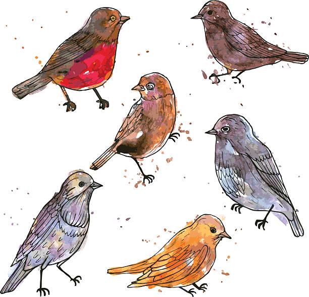 stockillustraties, clipart, cartoons en iconen met set of watercolor drawing birds - zanger vogel