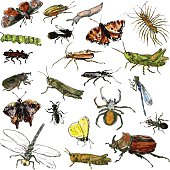 set of watercolor drawing insects, hand drawn vector illustration