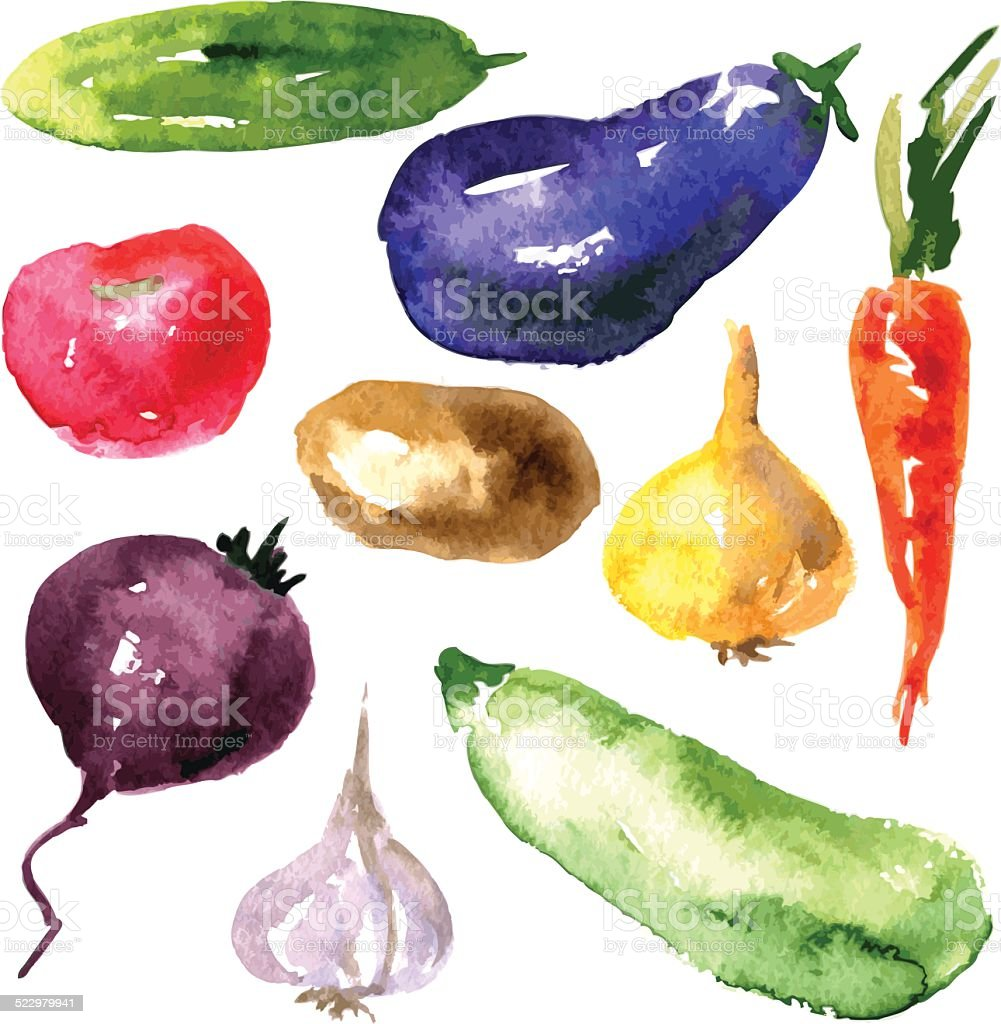Set of  watercolor drawing vegetables vector art illustration