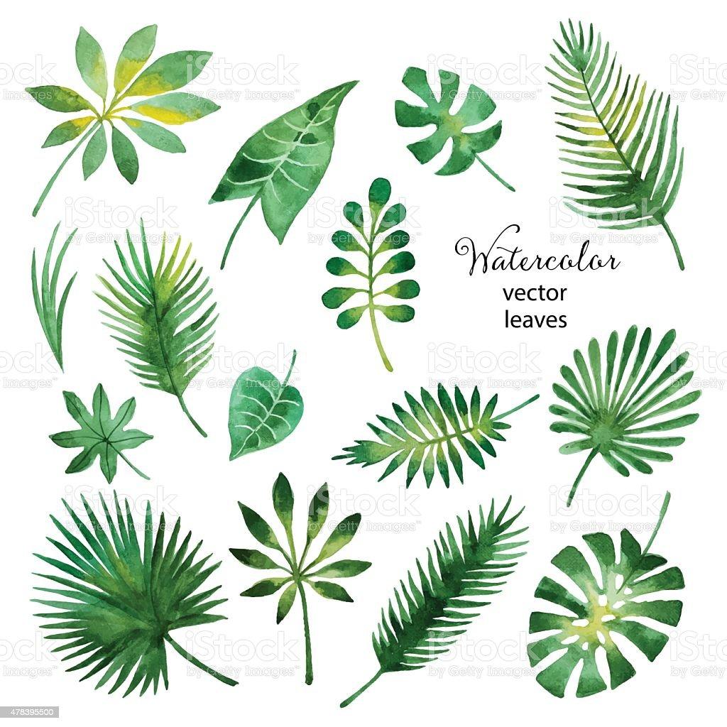 Juego de hojas de acuarela verde - ilustración de arte vectorial
