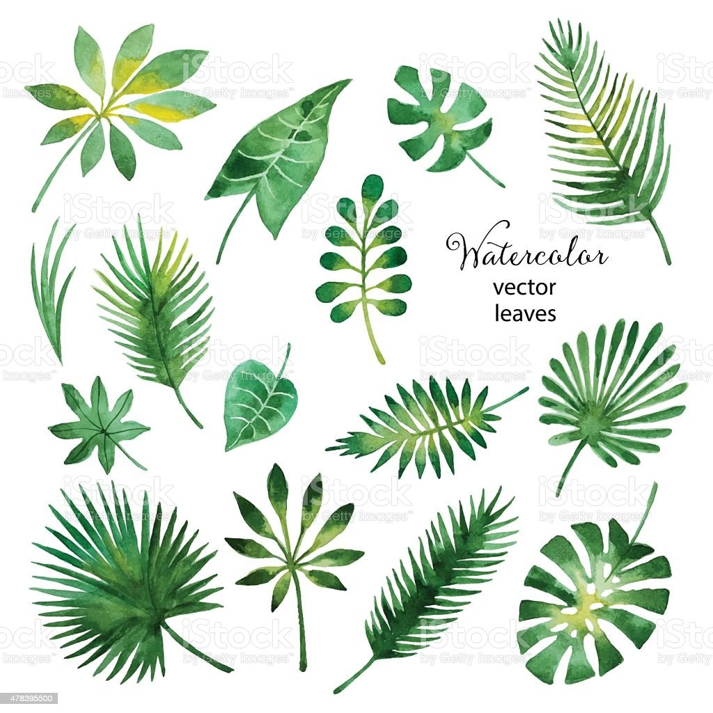 Set of watercolor green leaves vector art illustration