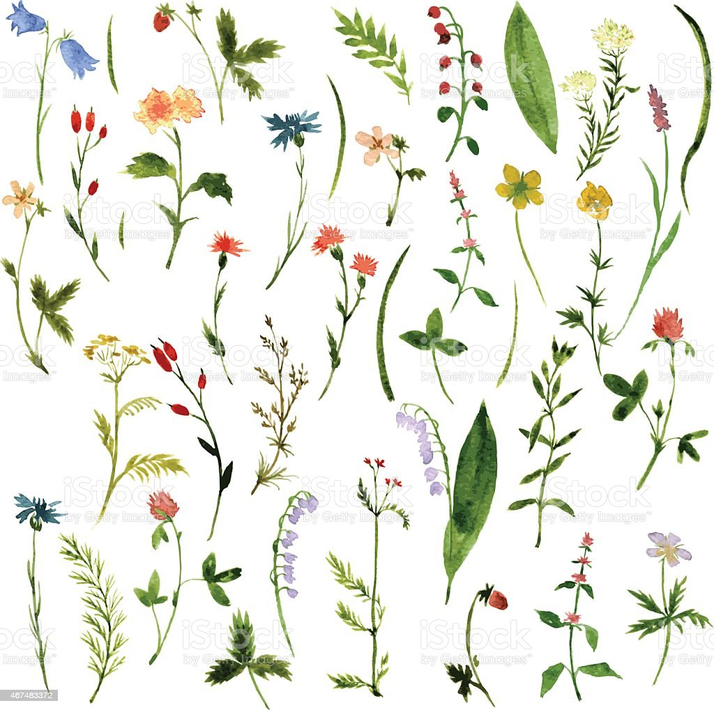 Set of watercolor illustrations of herbs and flowers vector art illustration