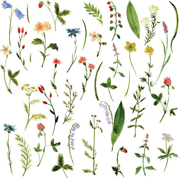 の水彩画のハーブと花 - 薬草点のイラスト素材/クリップアート素材/マンガ素材/アイコン素材