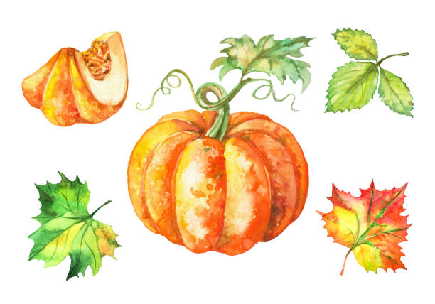 Set of watercolor illustrations. Pumpkin and autumn leaves. Vector Set of watercolor illustrations. Pumpkin and autumn leaves. Vector. pumpkin stock illustrations