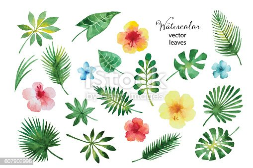 Set of watercolor green leaves and hibiscus flowers isolated on white background, vector illustration.