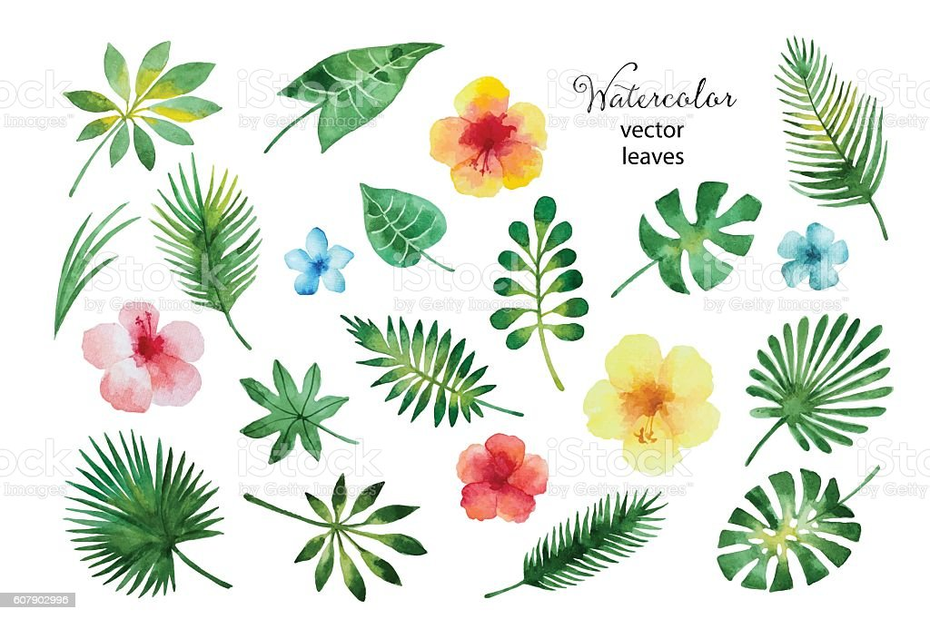 Set of watercolor leaves and flowers. vector art illustration