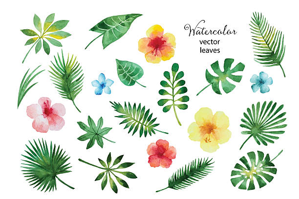 set of watercolor leaves and flowers. - 열대 식물 꽃 stock illustrations