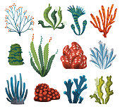 Set of watercolor seaweed and corals isolated on white background. Underwater algae. Aquarium plants collection. Vector marine life. Vector isolated corals and algae. Underwater flora.