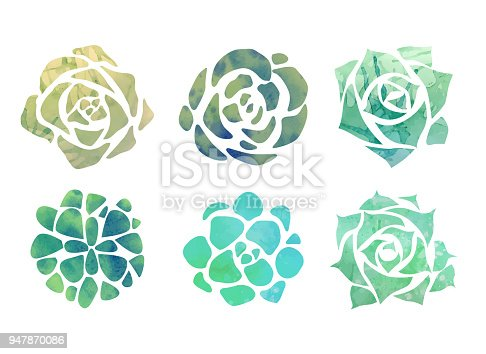 Set of watercolor succulents with a top view on a white background. Vector element for your creativity